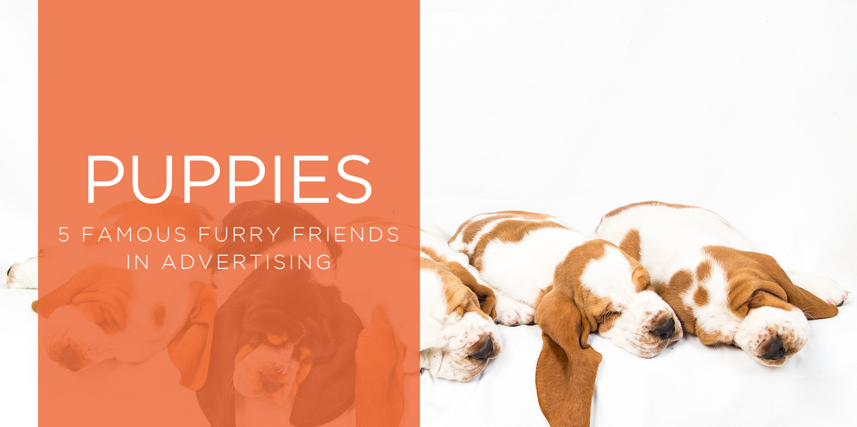 5_Famous_Puppies_in_Advertising_blog.png
