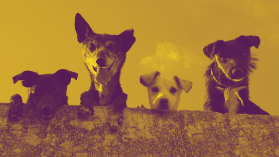 2020 Ad Trends: How Pet Advertisers Market During Quarantine